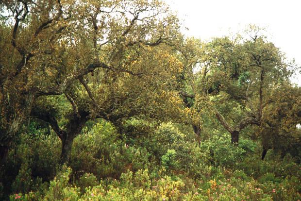 El parque natural Sierra Morena, solo con consenso
