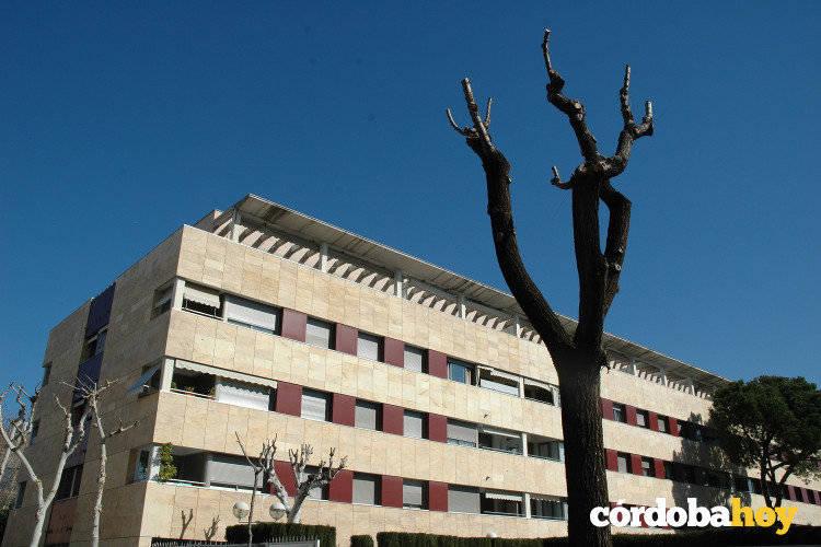 Las podas de árboles en la Huerta de San Rafael generan las primeras protestas