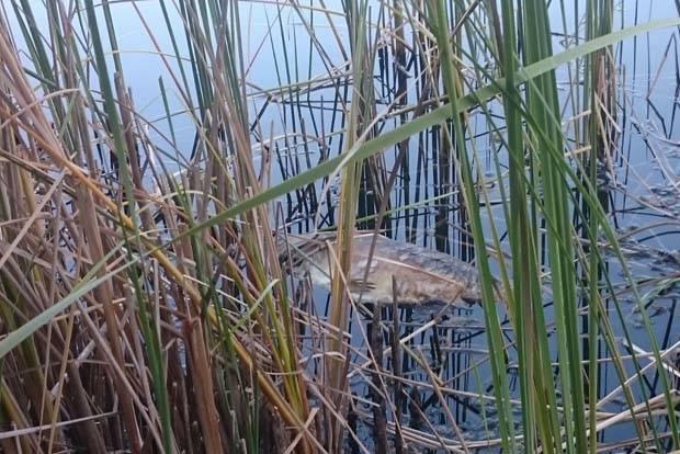 Los vecinos de las Jaras denuncian que el lago está contaminado