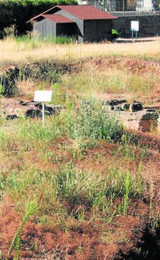Los vecinos denuncian el mal estado de las ruinas de Cercadilla