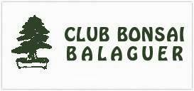Club Bonsai Balaguer