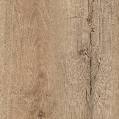 Sanctuary Oak