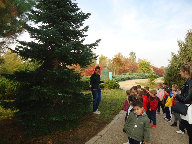 Salida al Arboretum