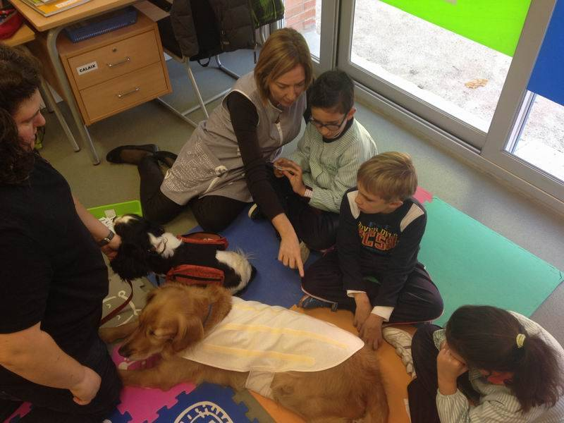 EDUCATION ANIMAL ASSISTED Session 2: Joining with Clover