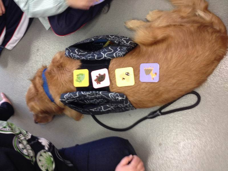 EDUCATION ANIMAL ASSISTED Session 9: Tactile stimulation.