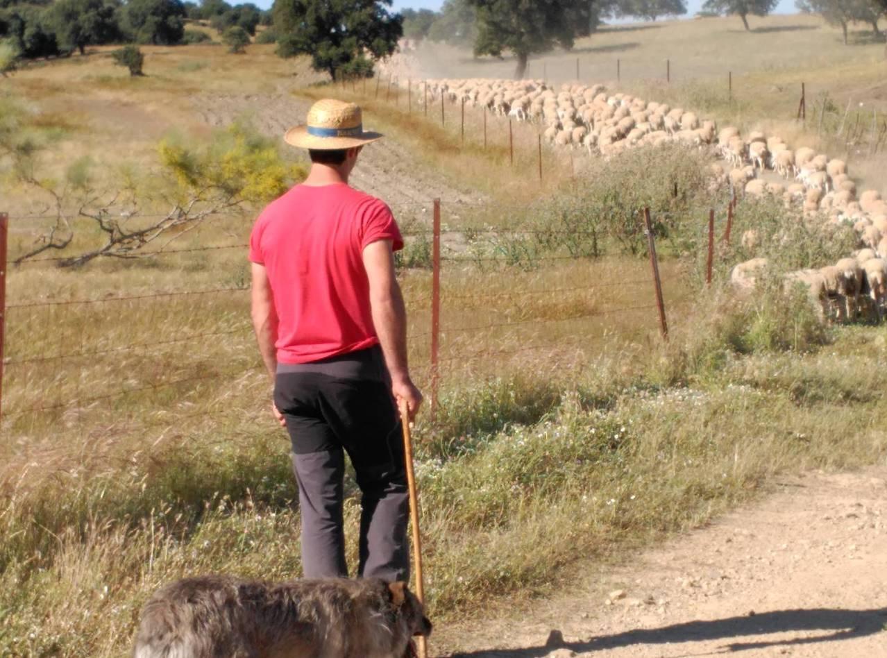 Agricultura, ganadería y cambio climático.