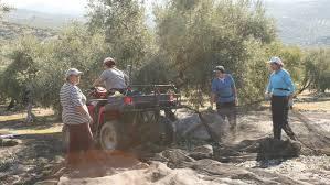 El dificil camino hacia la Igualdad: Mujeres trabajando en un olivar jiennense.