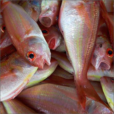 Conserves Peix