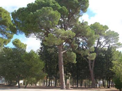 Parc del Convent