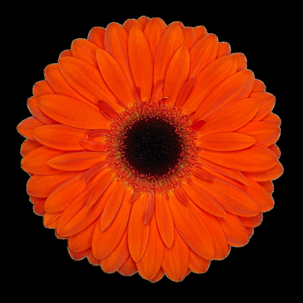 Flors Noe
