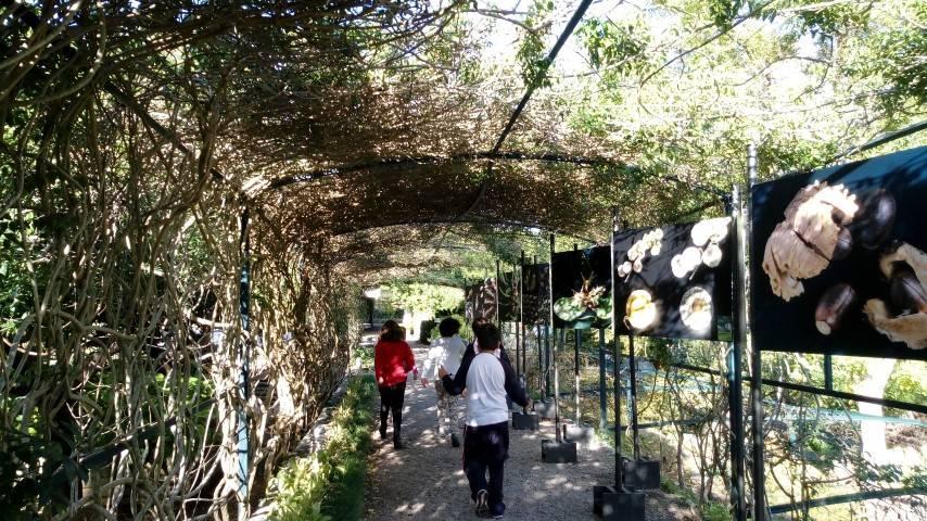 Els de 4t de Primària anam al Jardí Botànic