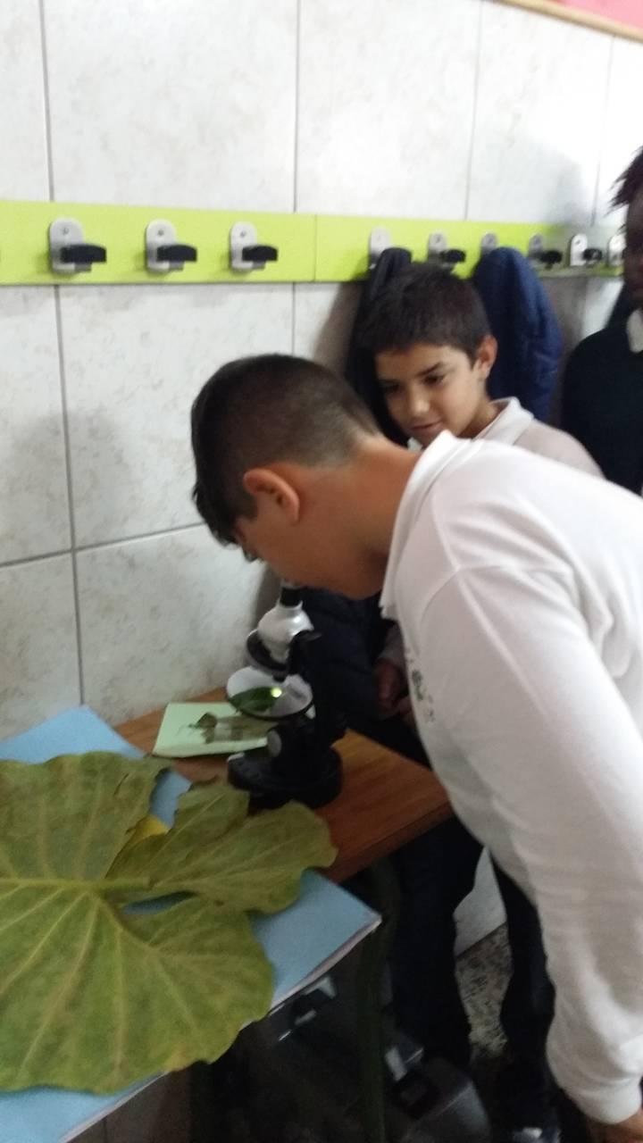 Investigant amb el microscopi 5è