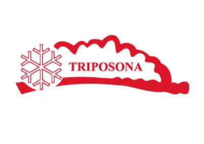 Triposona