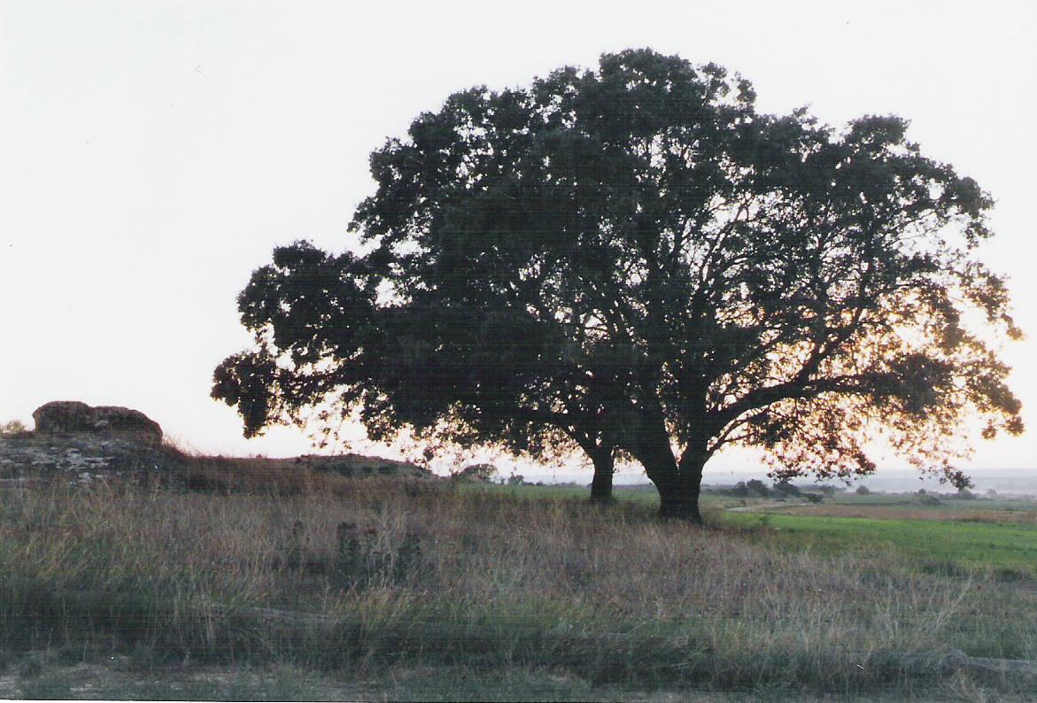 Acords del ple municipal del 9 de febrer sobre mesures de protecció medioambiental de la banqueta del canal i la Bovera i del Pou de l'Or