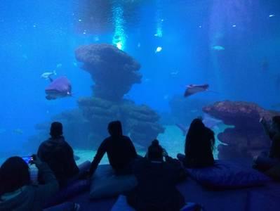FPB visita Palma Aquarium