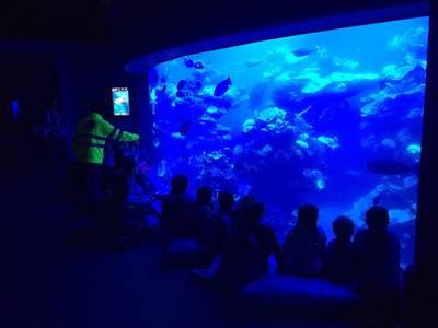 Visita Palma Aquari