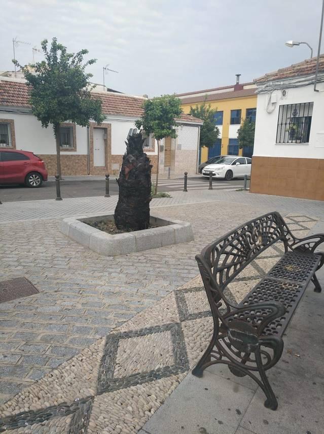 La A.V. Guadalquivir del Campo de la Verdad exige que comience la poda anual ya