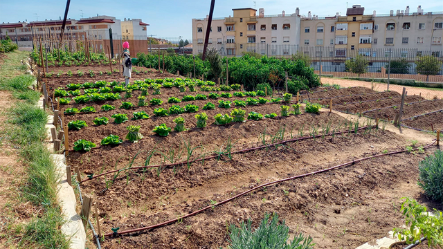 Al-Zahara, Urbanismo e Imgema pactan abrir más huertos urbanos