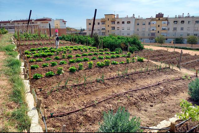 El Ayuntamiento y la Federación de Asociaciones de Vecinos impulsan los huertos urbanos