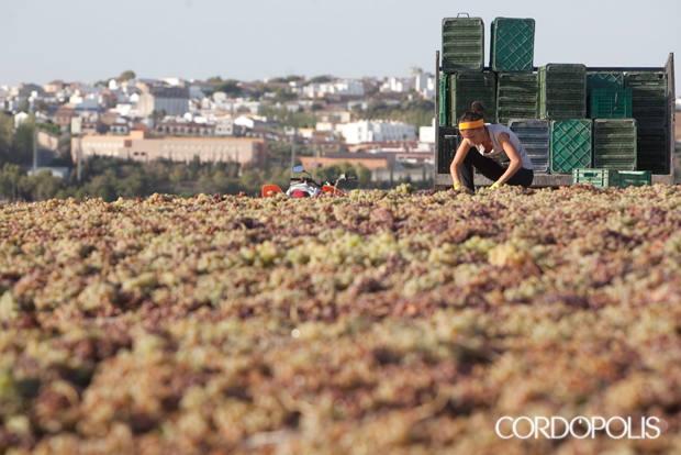 El cambio climático ya está adelantando las cosechas en Córdoba y dejando sin comida al ganado