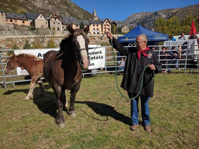 14au Concors Morfologic deth Shivau Pirenenc Catalan dera Val d'Aran