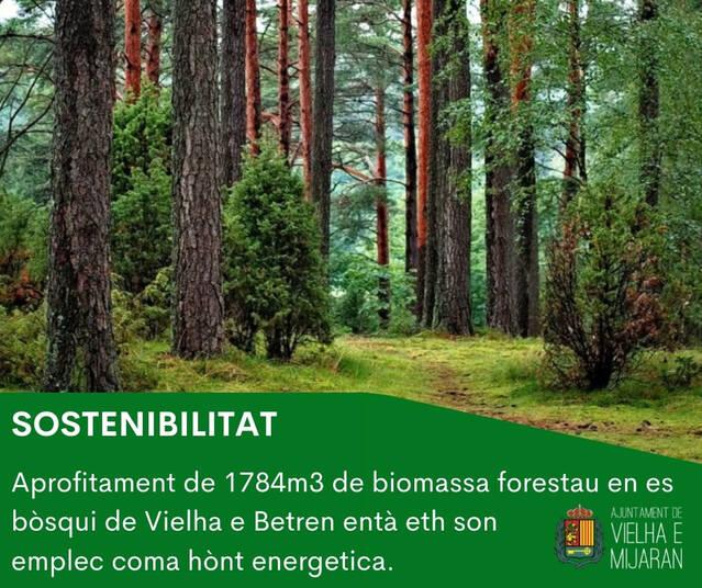 Er Ajuntament de Vielha e Mijaran e era EMD de Betren trèn a subasta 1784 m³ de biomassa forestau des montanhes d'utilitat publica