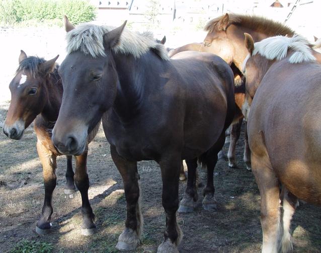 Eth Conselh Generau d'Aran concedís es ajudes ara ramaderia de montanha en zònes damb dificultats especiaus