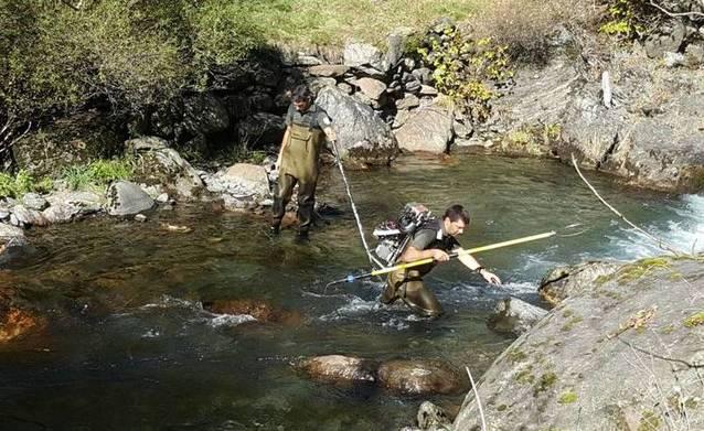 Pesca electrica tà repoblar es arrius damb alevins de trueita autoctòna