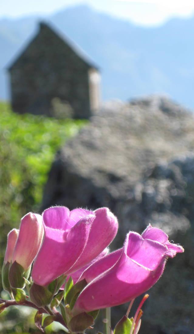 S'apròpe era sason de romiatges en municipi de Vielha e Mijaran