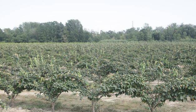 Agricultura facilita eines de guia i orientació en el marc del programa pilot de Mentoratge Professional
