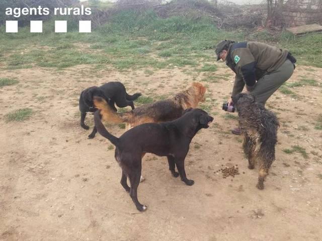 Rescat de gossos perduts a Sant Ramón