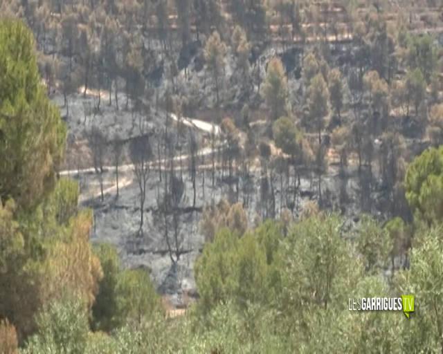 Agricultura paga 100.000 euros en ajuts als afectats de les Garrigues per l'incendi de Ribera d'Ebre