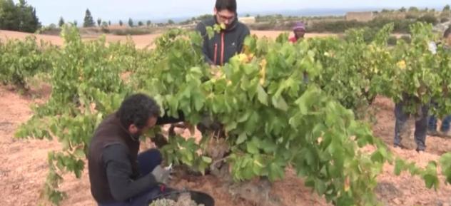Augmenta la presència dels vins de la DO Costers del Segre als restaurnats