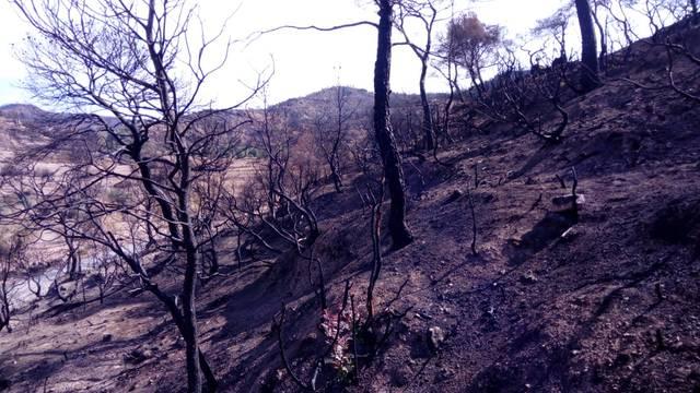Comença la prohibició de foc al bosc
