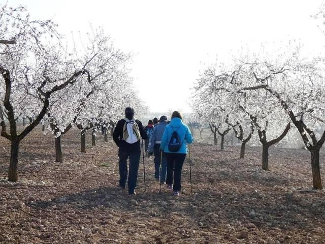 Comencen les rutes per les Garrigues per gaudir de la floració de l'ametller