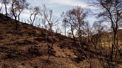 El Departament d'Agricultura rep 85 sol·licituds d'ajuts d'afectats per l'incendi de la Ribera d'Ebre, les Garrigues i el Segrià