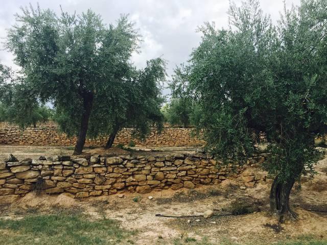 El fòrum per promoure l'oli d'oliva a la Granadella, a la tardor