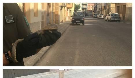 Els Agents Rurals capturen una serp agressiva a Castelldans