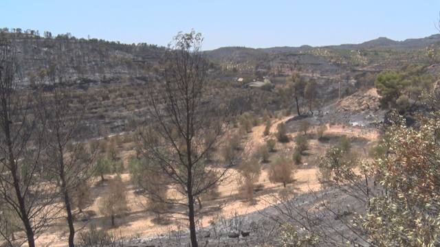 Una de les zones afectades per l'incendi al terme de Bovera