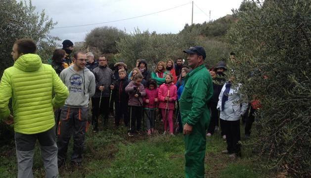 Juncosa mostra els sistemes de recol·lecció d'olives a la fira