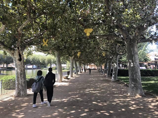 Les Borges engega un nou sistema d'esporga més sostenible per als arbres del municipi