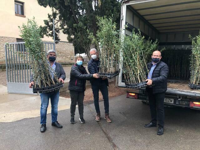 Un centenar d'oliveres solidàries a Arbeca