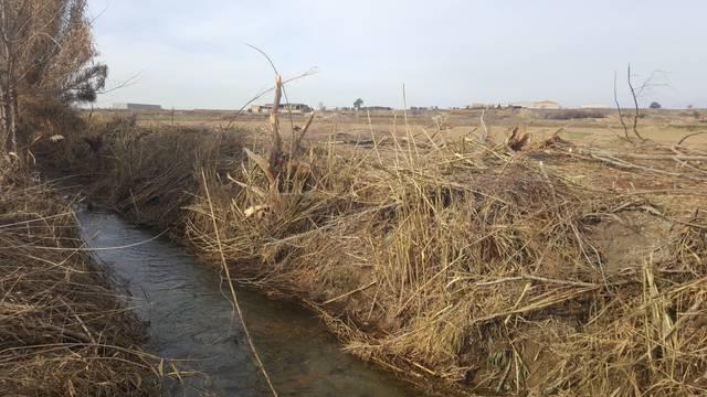 Denuncien un veí de Linyola per arrasar una dotzena d'arbres situats a la llera de la sèquia del poble