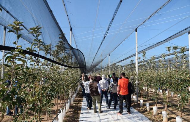 Mollerussa, punt de trobada per a la innovació del sector fructícola