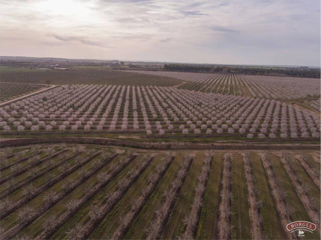 Borges reforça la seva aposta per la biodiversitat en l'entorn agrari