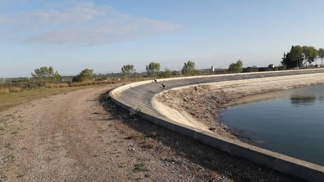 El canal d'Urgell ampliarà els sistemes de protecció per evitar que s'hi ofeguin animals salvatges
