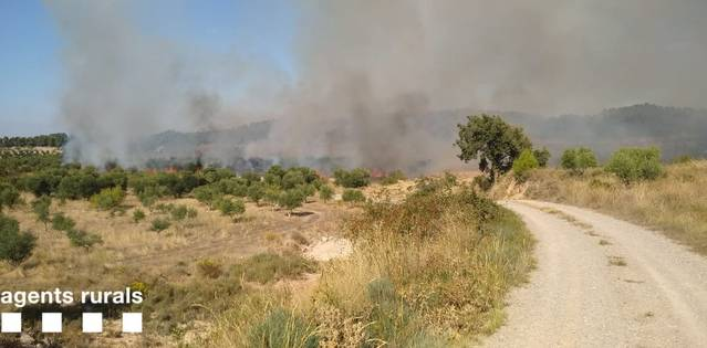 Incendi forestal als Omells de Na Gaia