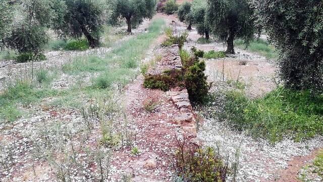 La pedregada de dissabte malmet diversos conreus de l'Urgell