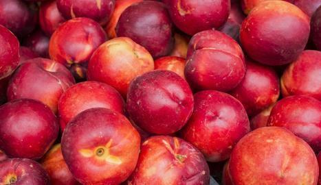 Pagesos de la fruita de l'Urgell i el Pla refan declaracions de l'IRPF