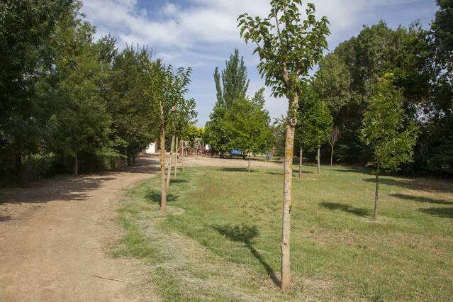Planten 70 arbres a la peixera del Sió a Puigverd